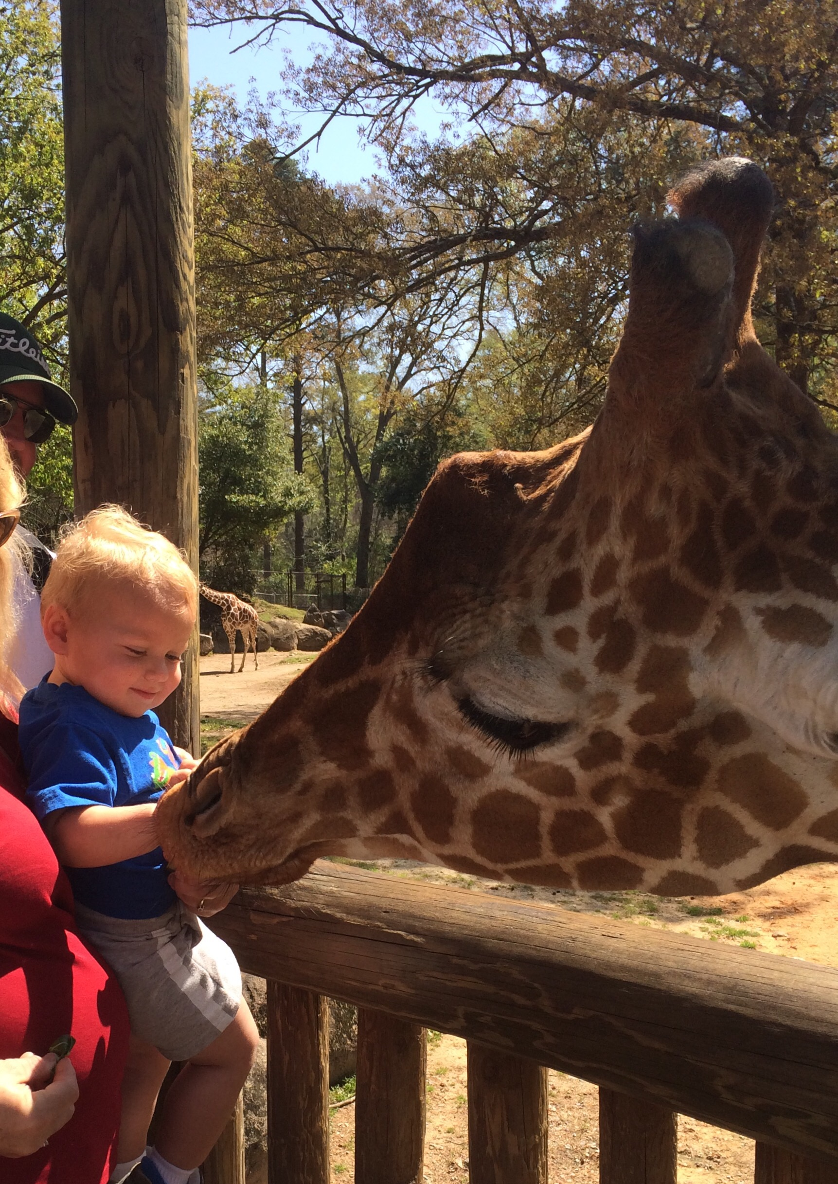 Riverbanks Zoo Day | Happy Little Honey